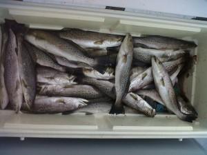 Louisiana charter fishing trout